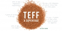 teff-a-supper-food-Mirfak-wholesale-supplier.jpg