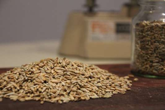 Mirfak-grain-rye-grain-wholesale-grain-supplier-Australia.jpg
