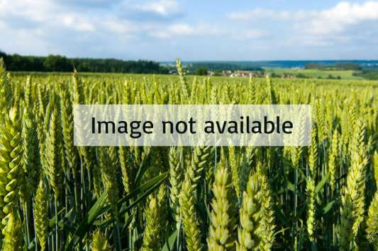 mirfak-grains-seeds-flours-image-not-available.jpg