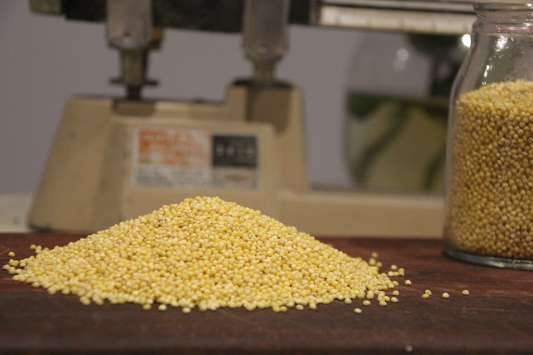 Mirfak-seeds-hulled-millet-wholesale-seed-supplier-Melbourne-Sydney-Australia.jpg